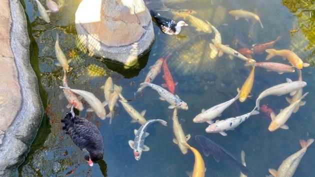 Fischtreiben
